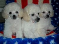 Gigi's Pups