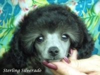 Sterling Silverado