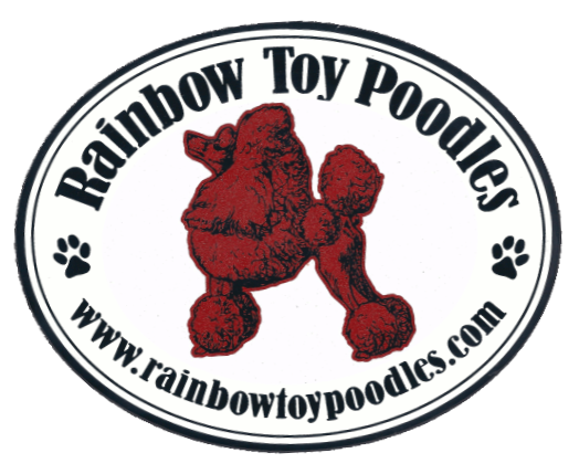 Rainbow Toy Poodles